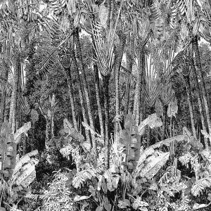 Casamance panoramic wallpaper Arbre du Voyageur black