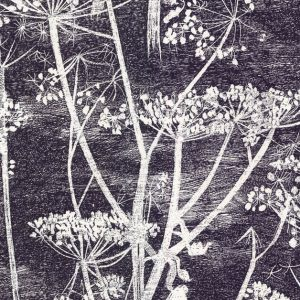 Cole and Son wallpaper Cow Parsley 7046