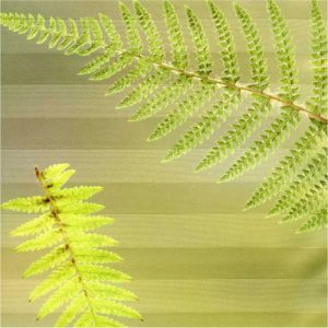 EST-1966 shower curtain NO-2 Green Ferns