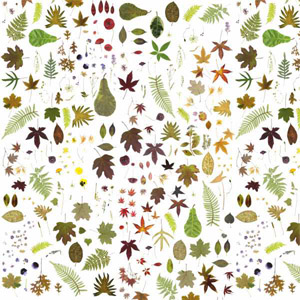 EST-1966 wallpaper NO-1A Flowers White