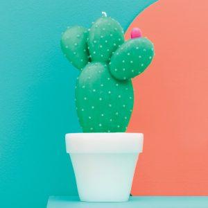 Sunnylife Round Cactus candle