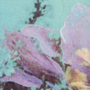 Jean Paul Gaultier Home curtain Brassee Bleuet